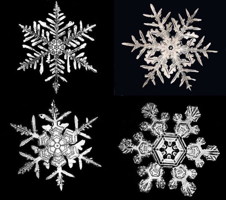 Bently Snowflakes