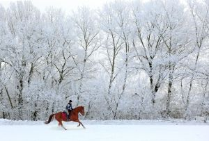 On horse in winter forest