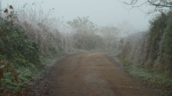 The road we live on peters out 20 yards from our gate into a bridleway and footpath. It doesn't often look quite this eerie.